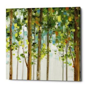 "Epic Graffiti ""Forest Study II"" by Lisa Audit, Giclee Canvas Wall Art, 37""x37"""