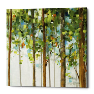 "Epic Graffiti ""Forest Study III"" by Lisa Audit, Giclee Canvas Wall Art, 37""x37"""