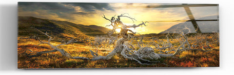 "Image of Epic Graffiti ""Dame of the Desert"" in a High Gloss Acrylic Wall Art, 60"" x 20"""