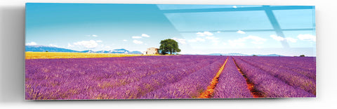 "Epic Graffiti ""Field of Lavender"" in a High Gloss Acrylic Wall Art, 60"" x 20"""