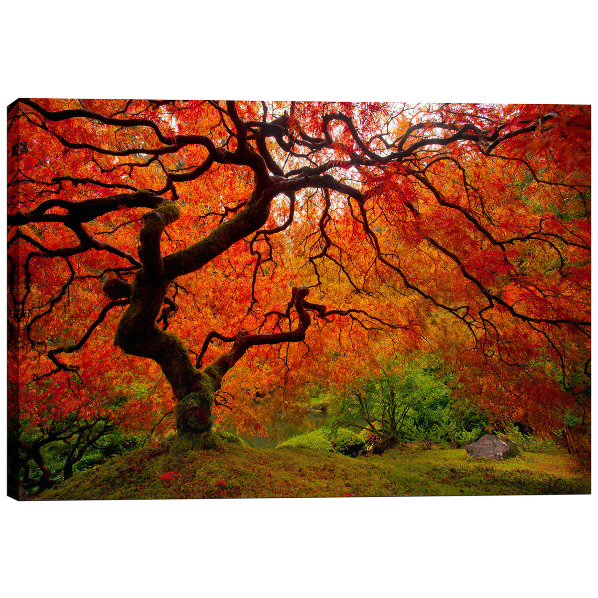 "Epic Graffiti ""Tree Fire"" by Darren White, Giclee Canvas Wall Art"