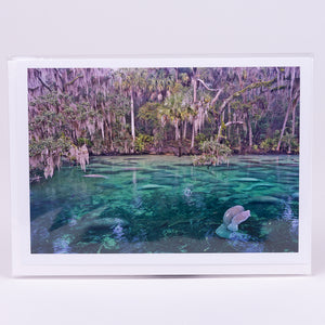 Lots of Manatees at Blue Springs State Park Photographic Notecard