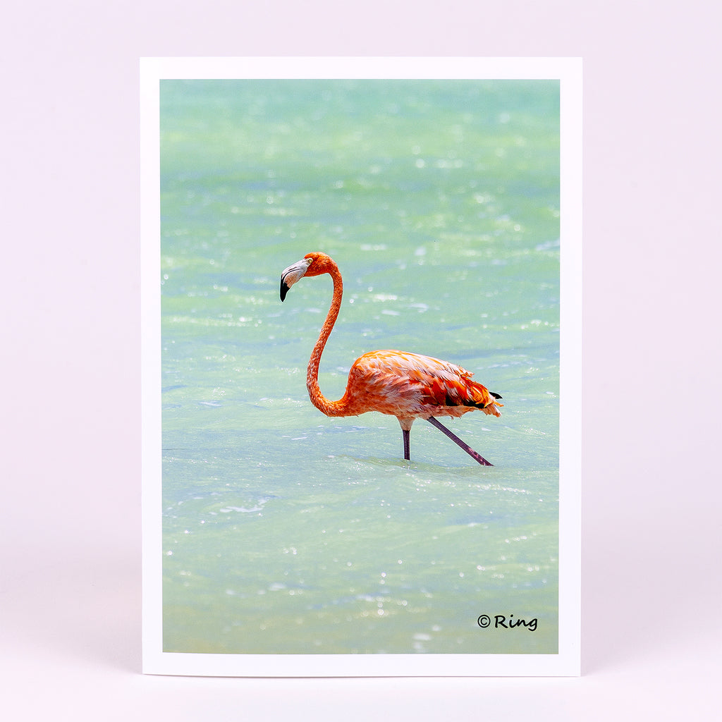 Pink Flamingo Photographic Notecard (Blank Inside)