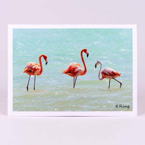 Photographic Flamingo Notecard (blank inside)