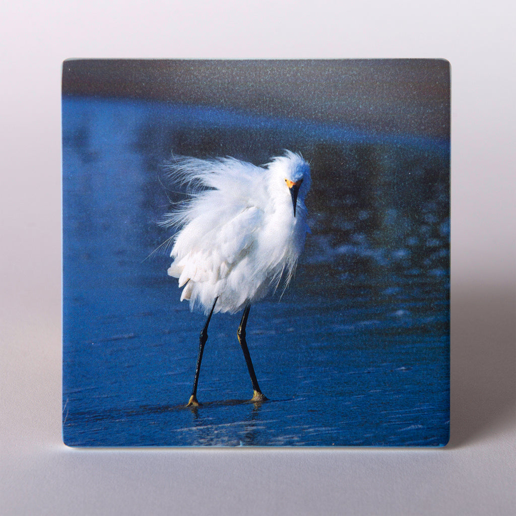 "These absorbent stoneware ""Snowy Egret"" coasters on the beach"