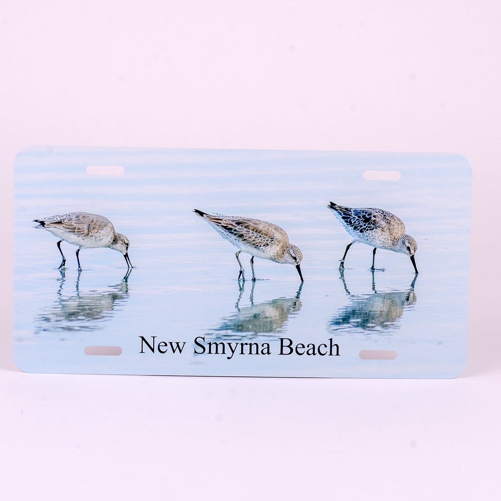 Glossy Aluminum License Plate for your car with 3 white rump sandpipers on the beach