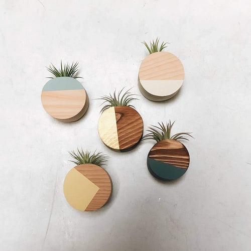 Goodsmith Circle Air Plant Magnet Magnets Metallic Copper