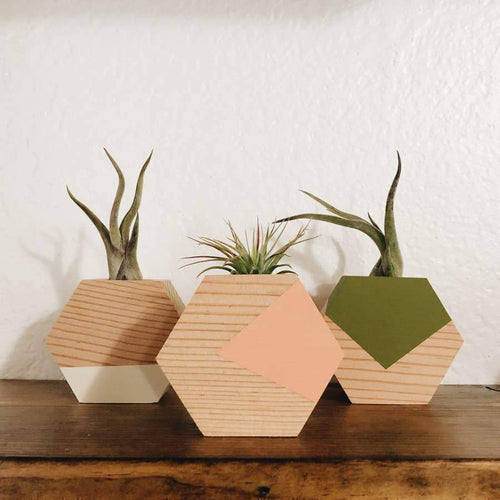 Goodsmith Hexagon Air Plant Holder Planters Coral