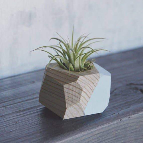 Goodsmith Small Geo Air Plant Holder Planters Forest Green