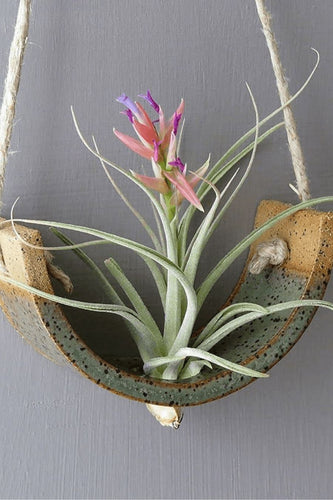 Mudpuppy Small Hanging Air Plant Cradle - Gunmetal Green Planter Vase Planters
