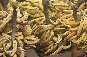 Pack: Plantain Pounded