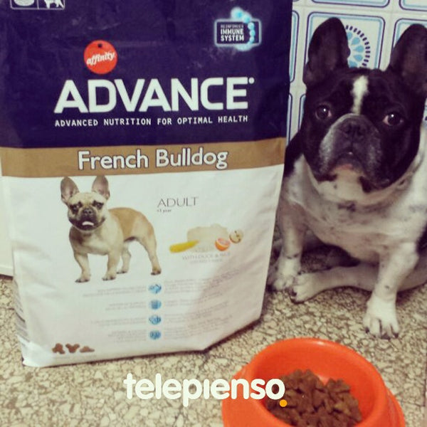 Advance Bulldog Francés