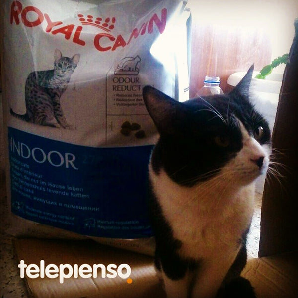 Royal Canin Indoor Gatos