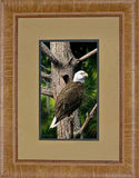 Southern Bald Eagle Decor Print