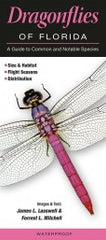 Dragonflies of Florida