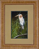 Great Blue Heron - perching Decor Print