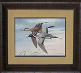 Pintail Ducks - flying Decor Print