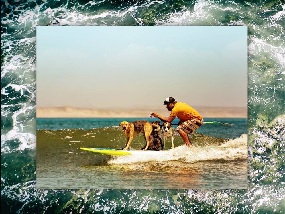 Ron teaches his dogs to surf with him