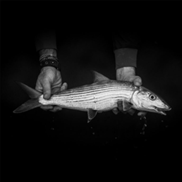 Beneath the Surface Podcast Episode 17: LONO Tarpon