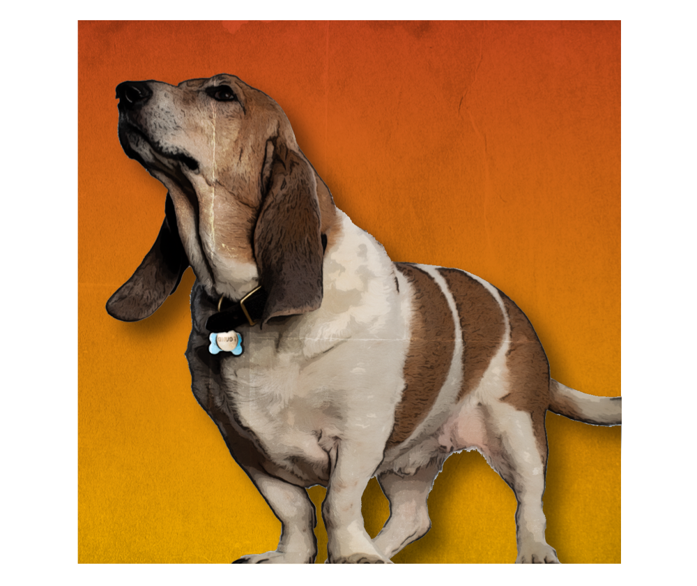 Smokey and the Beetle: The Hound Dog