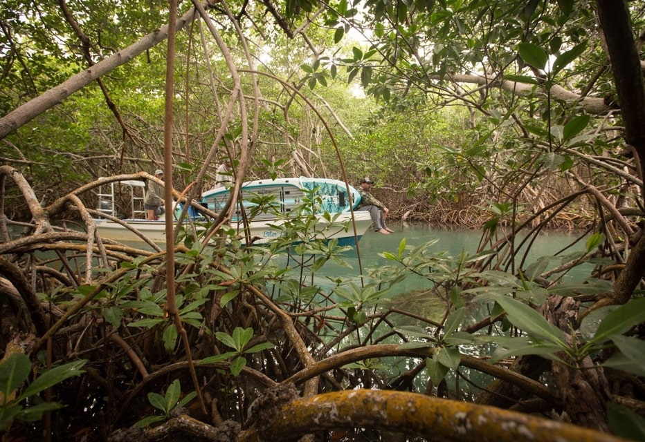 In the thick of Belize islands