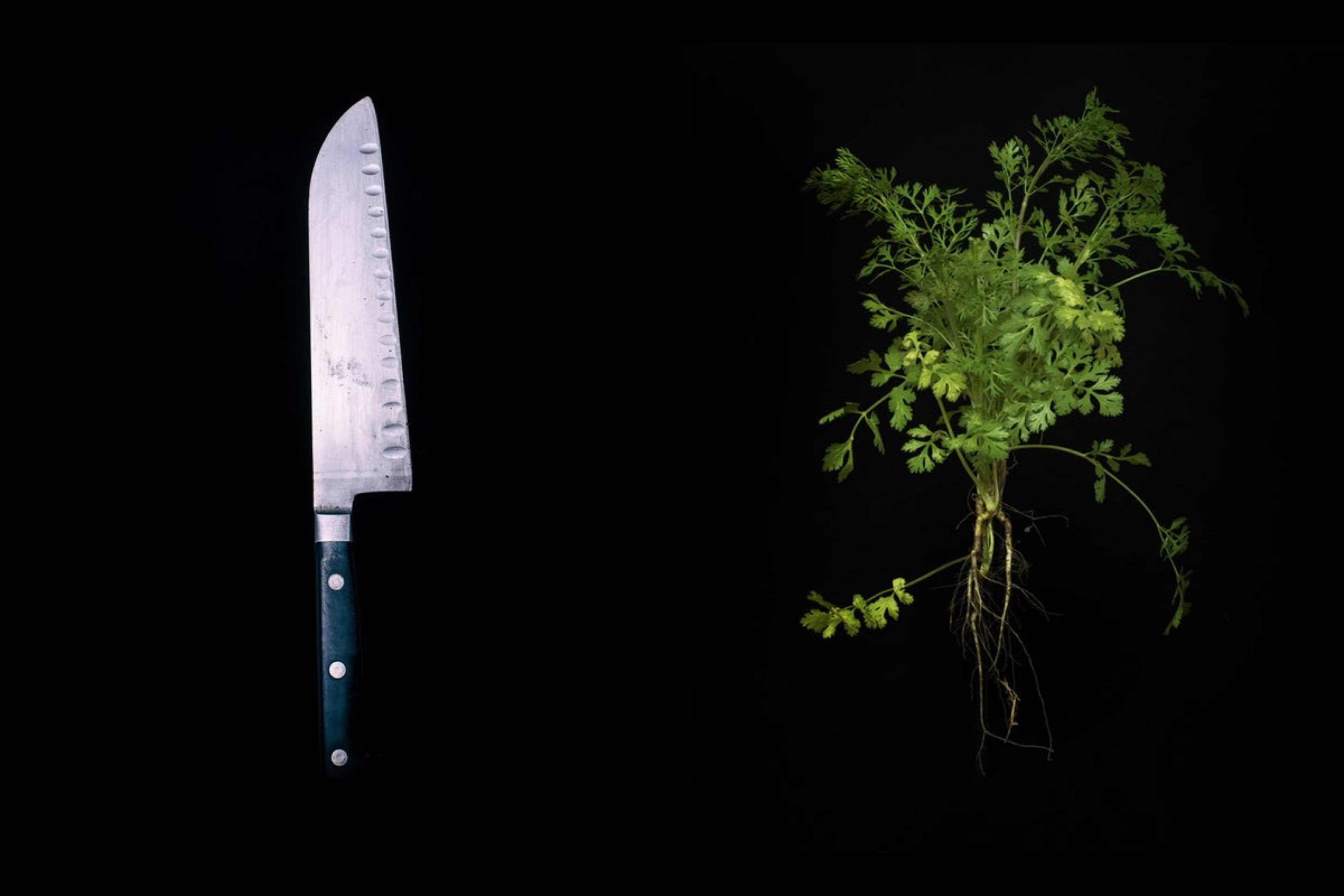 Cooking knife and herbs