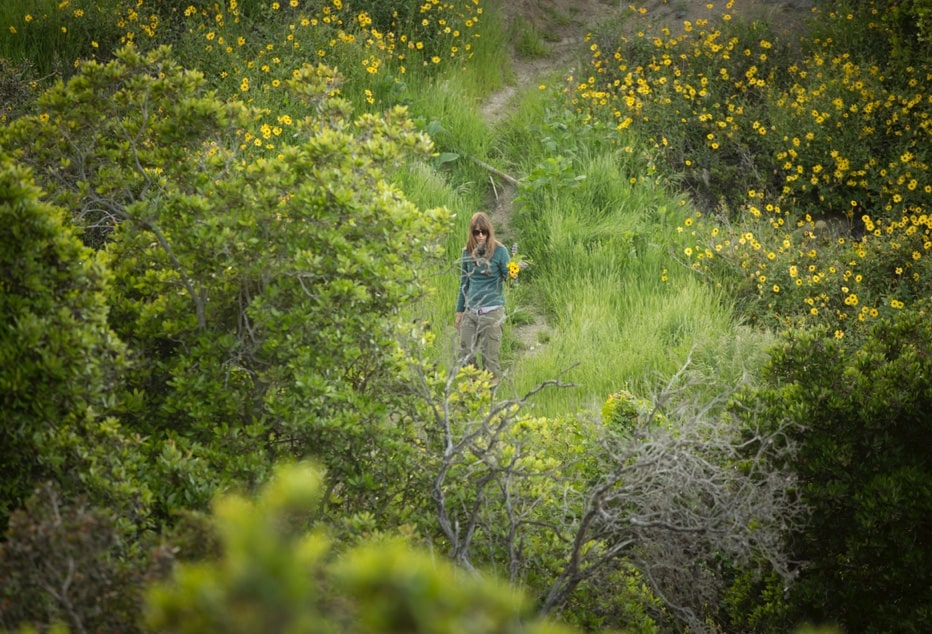 In the fields on Catalina Island