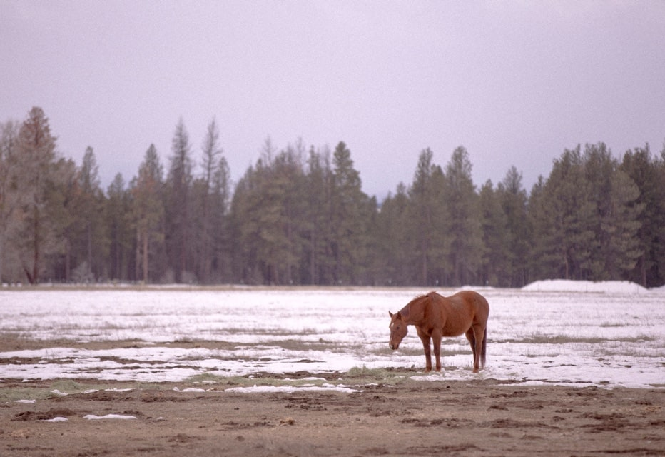Horse roaming land in Bend, Oregon