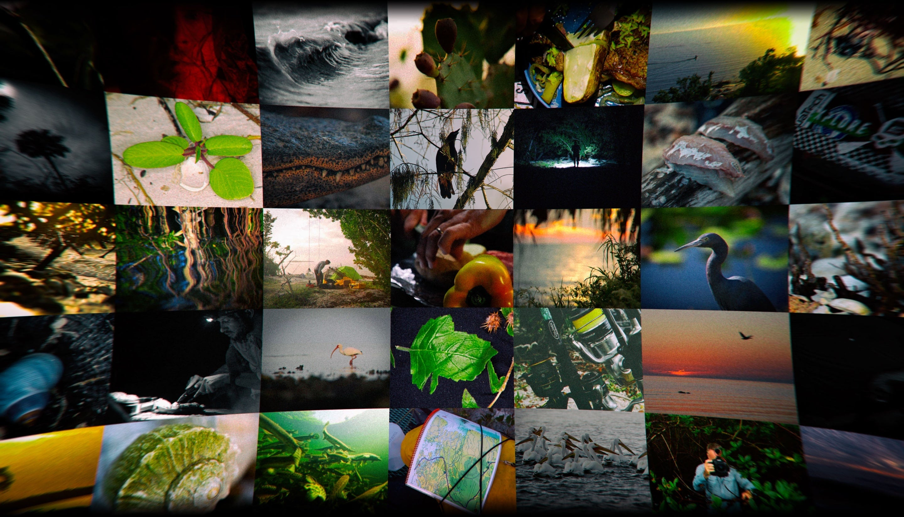 Everglades Collage