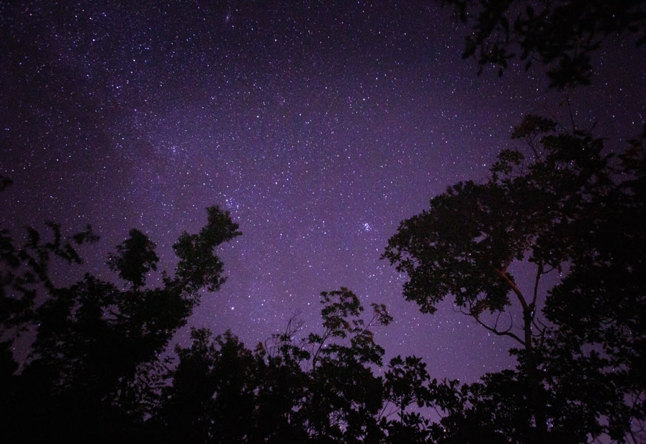 everglades night time stars