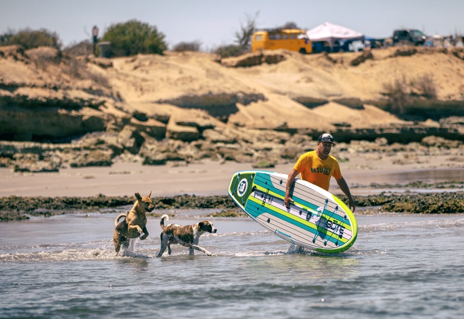 man and dogs walking out to ride standup paddleboard in surf