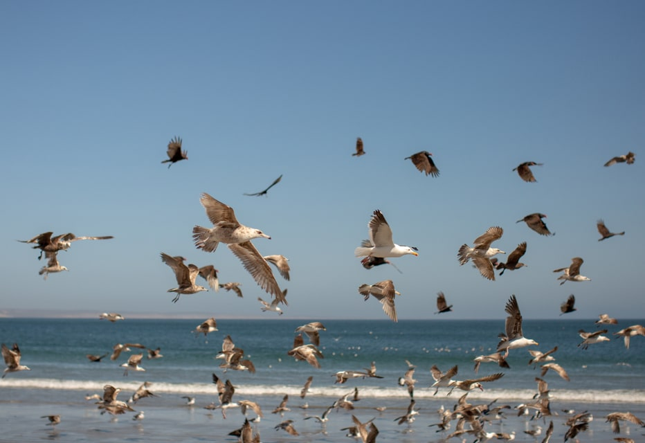 flock of seagulls on beach in Mexico