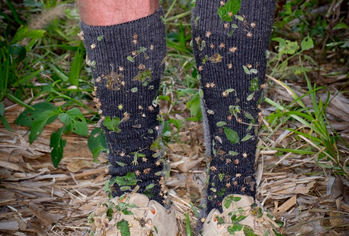 socks covered in rockachaws