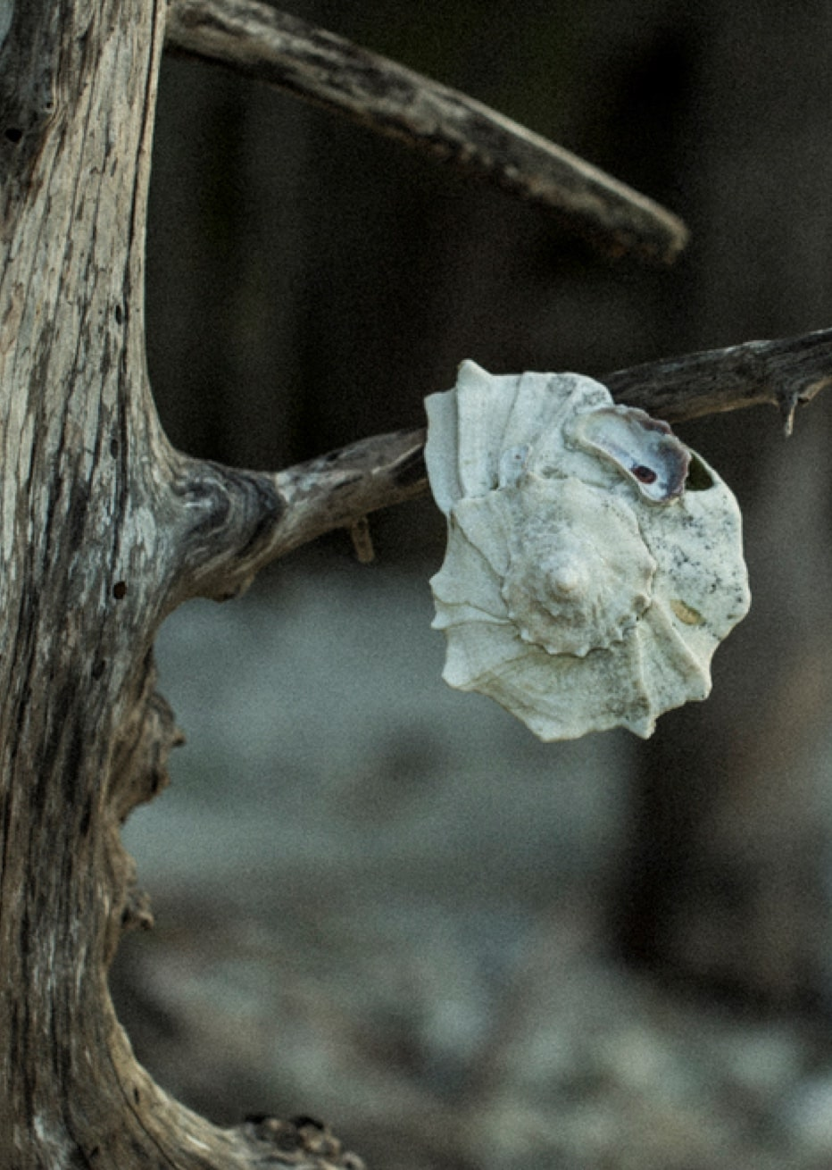 shell on a branch