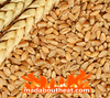 Grain for fuel boiler burning wheat madaboutheat