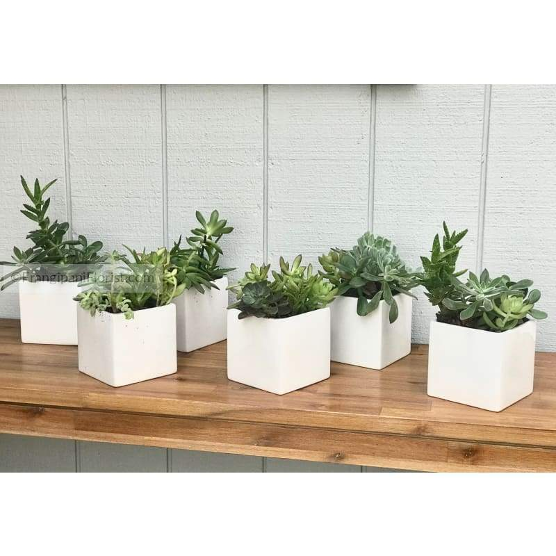 Succulents Arranged in Modern Square Vase