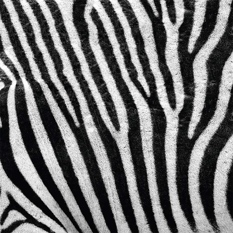 Close-up inage of zebra hair