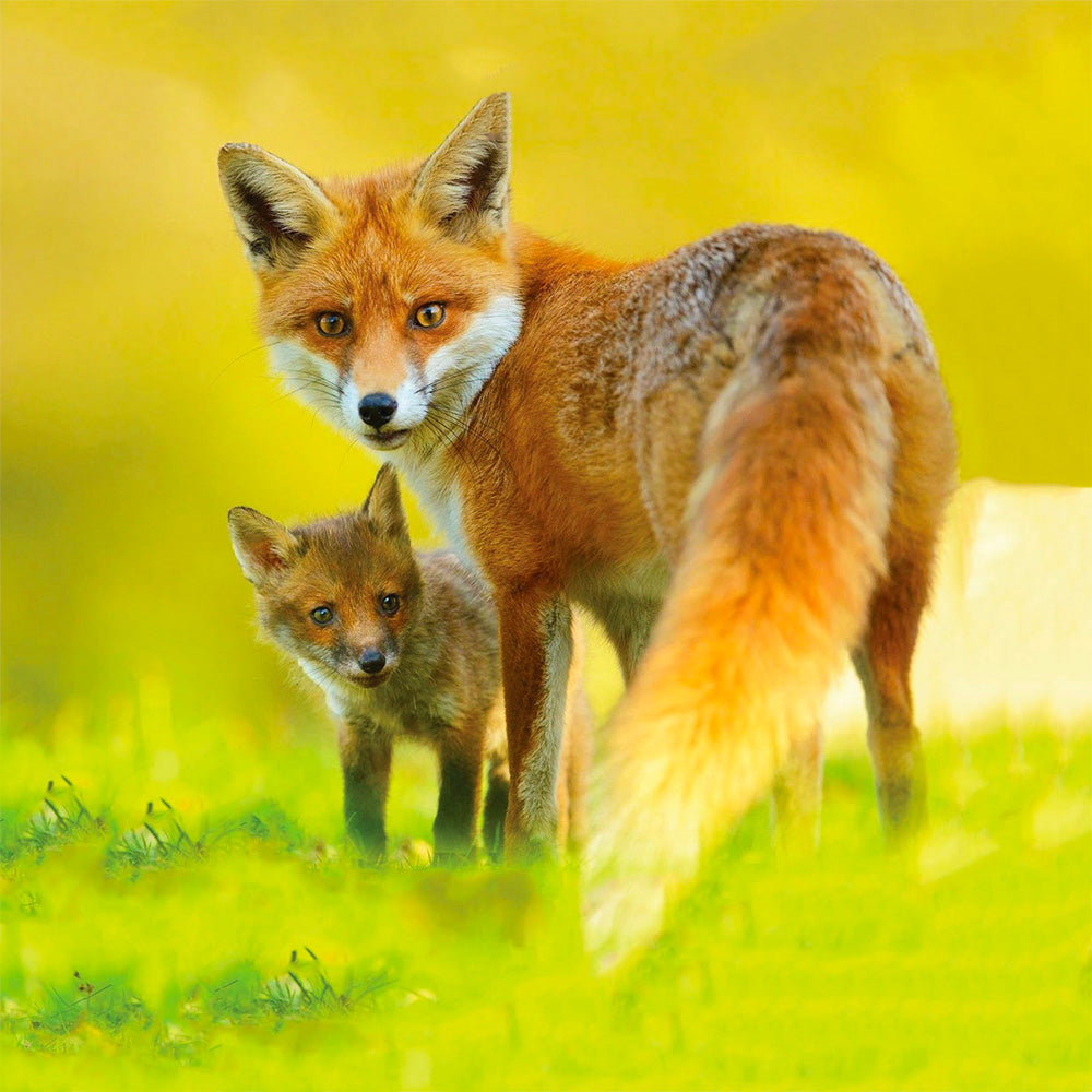 Image of a fox and kit