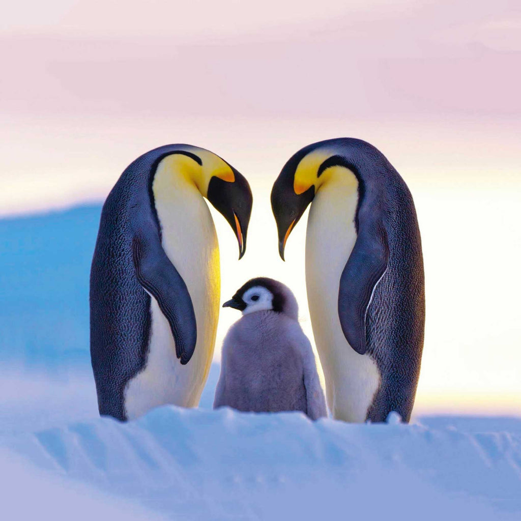 Image of penguin family