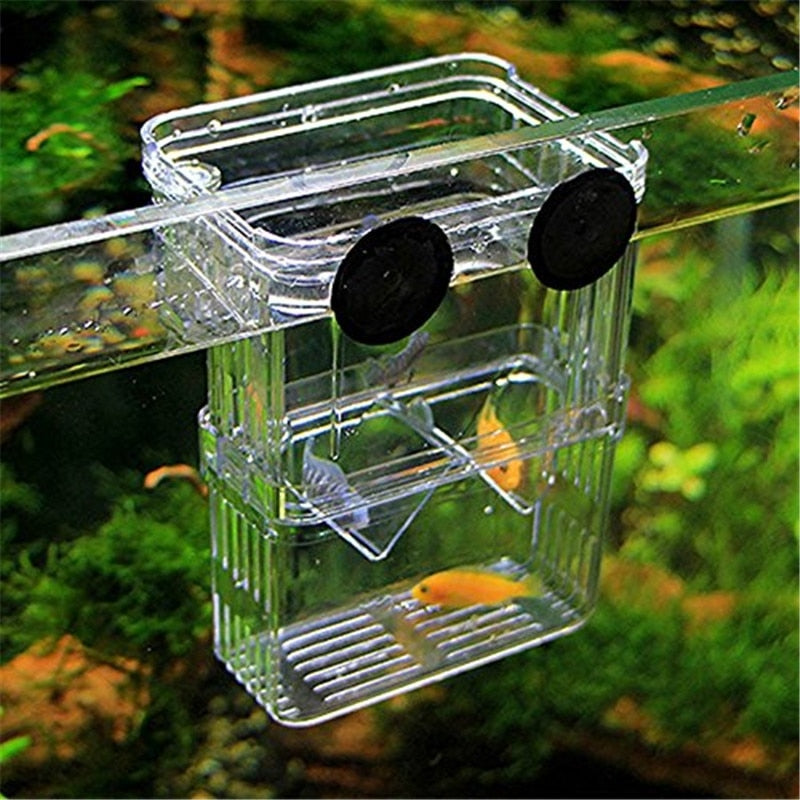 Acrylic Fish Breeding Isolation Box For Fish Tanks
