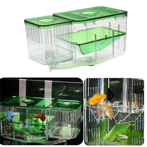 Large Fish Tank and Incubator