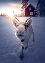 Load image into Gallery viewer, Golden reindeer