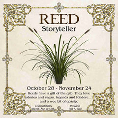 Celtic Tree Zodiac - REED, The Storyteller October 28 - November 24