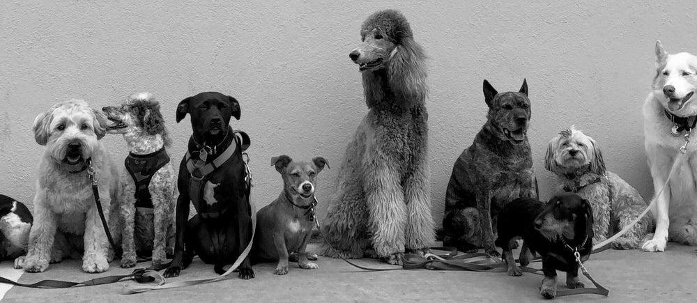 Dog lineup against the wall