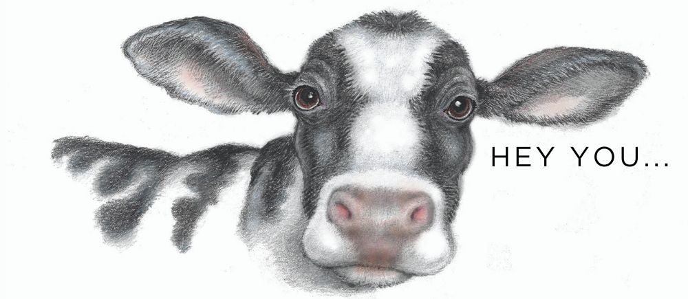 hand drawing of a cow