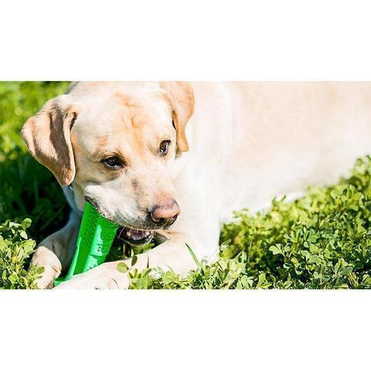 FEW IN STOCK! Flash Sale Today!Daily Toothbrushing For Your Dog!