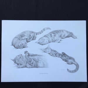 "Cat Print - ""The Cat's Whiskers"""