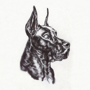 Great Dane - Alpha Dog