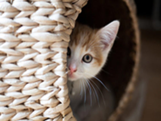 Why Cats Love Den-like Beds