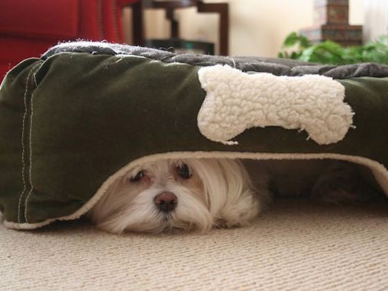 Reasons Why Dog Beds Should Resemble Dens